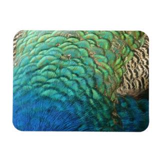 Peacock Feathers Premium Magnet