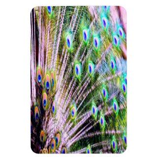 Peacock Feathers Rectangular Photo Magnet