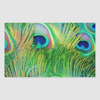 Peacock Feathers Sticker