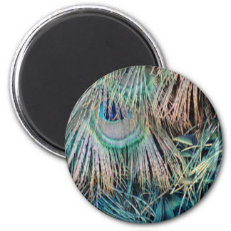 Peacock Feathers Tan Green And blue Magnet