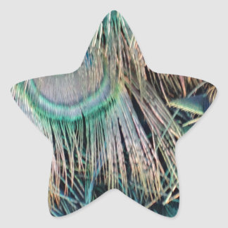 Peacock Feathers Tan Green And blue Star Sticker