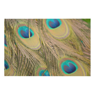 Peacock Feathers Wood Wall Art