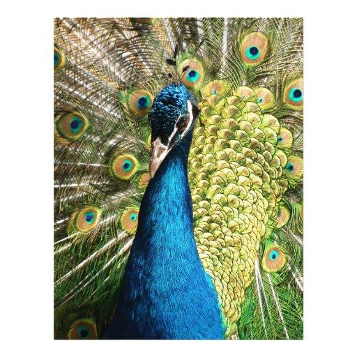 Peacock Flyer Design