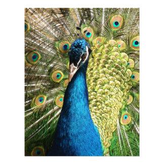 Peacock Custom Flyer