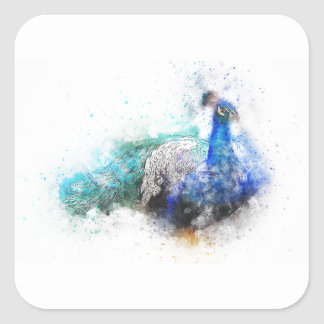 Peacock Gifts Square Sticker