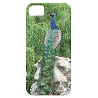 Peacock in A Garden  iPhone SE case