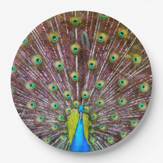 Peacock in Full Regalia Paper Plate