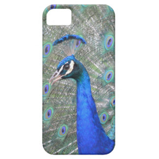 Peacock iPhone 5 Cover