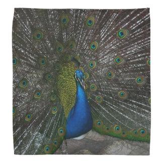 Peacock Kerchief