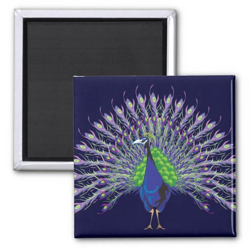 Peacock Magnets
