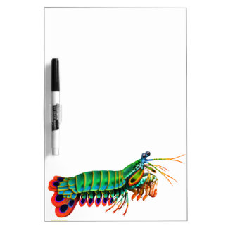 Peacock Mantis Shrimp Dry Erase Board
