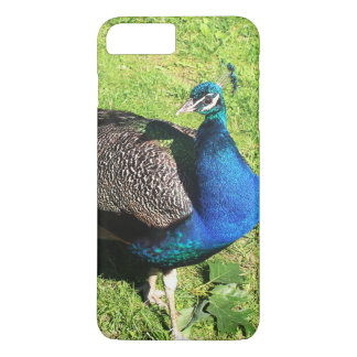 Peacock on green grass iPhone 7 plus case