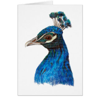 Peacock (Pavo cristatus) greeting card