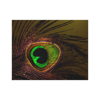 Peacock Peafowl Bird Canvas Print