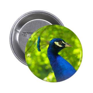Peacock (Pfau) 2 Inch Round Button