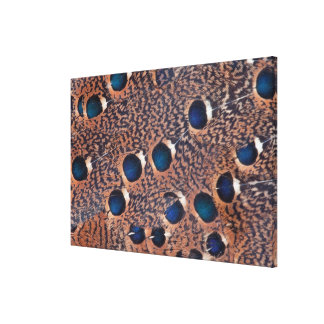 Peacock Pheasant Feather Design Canvas Print