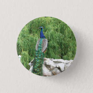 Peacock Photo  Badge 1 Inch Round Button