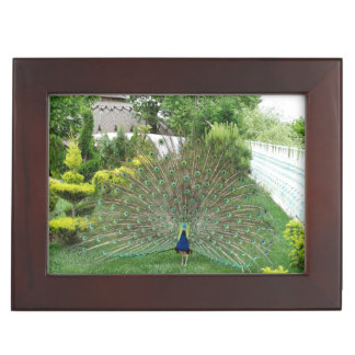 Peacock Photo  Keepsake Box