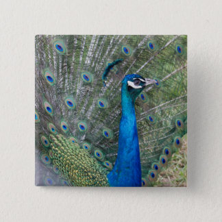 Peacock Photography 2 Inch Square Button
