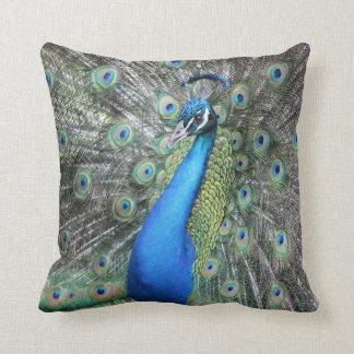 Throw Pillows Peacock : Peacock Pillows - Peacock Throw Pillows Zazzle