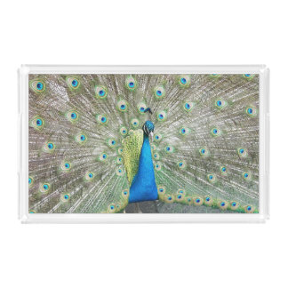 Peacock Plumage Photo Acrylic Tray