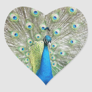 Peacock Plumage Photo Heart Sticker