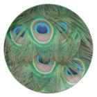 Peacock plumage plate