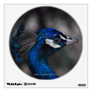 Peacock Portrait Wall Decal
