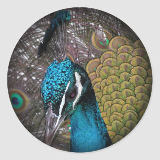 Peacock Round Sticker