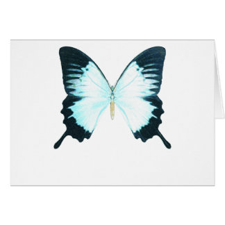 Peacock Royal Butterfly Card