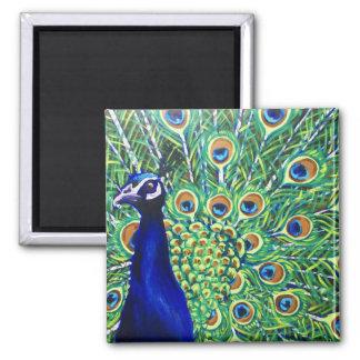 Peacock Square Magnet