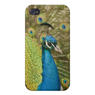 Peacock strutting iPhone 4/4S covers