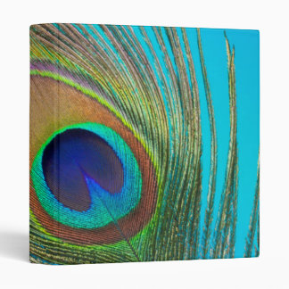 Peacock Tail Feather 3 Ring Binder
