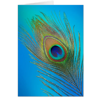 Peacock Tail Feather Card