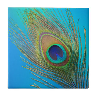 Peacock Tail Feather Tile