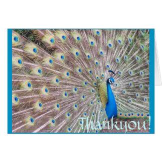 Peacock Thankyou! Card