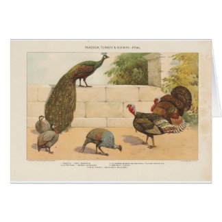 Peacock,Turkey, & Guinea Fowl Card