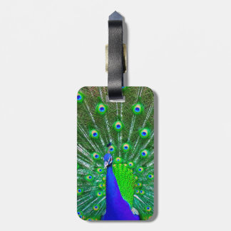 Peacock with fanned tail luggage tag