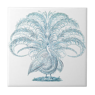Peacock with Outstretched Feathers Tiles