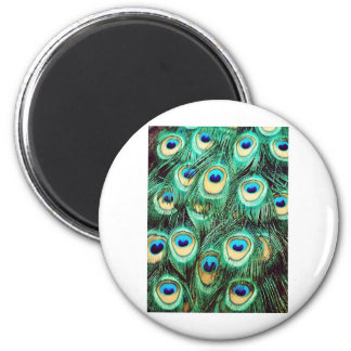 Peacocks and Feathers 2 Inch Round Magnet