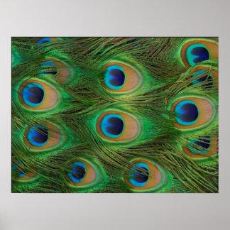 Peafowl / Peacock Print