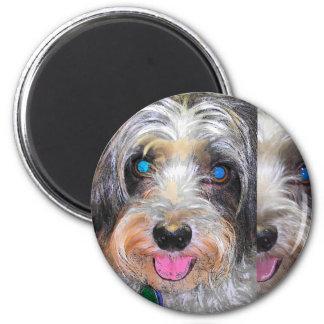 peanut the rescue dog magnet