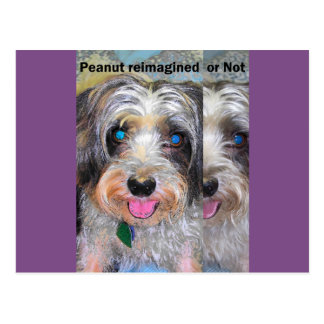 peanut the rescue dog postcard