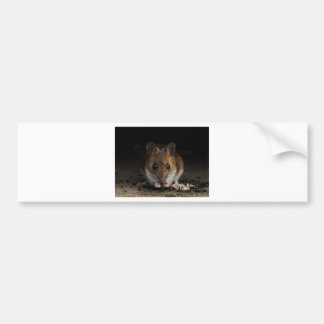 Peanut the Wood Mouse Bumper Sticker