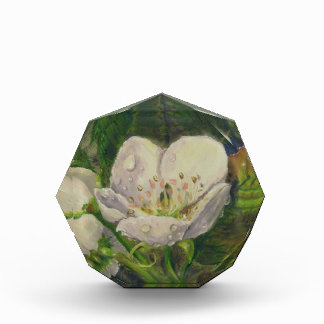 Pear Blossom Dream