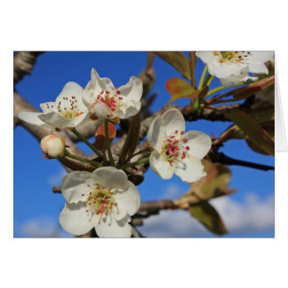 Pear Blossoms Card