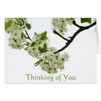 Pear Tree Branch Thinking of You, Blank Inside Card