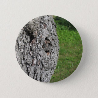 Pear tree trunk against green background 2 inch round button