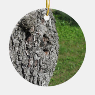 Pear tree trunk against green background ceramic ornament