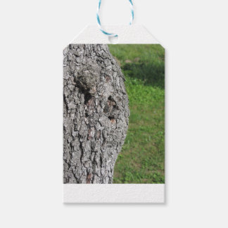 Pear tree trunk against green background gift tags